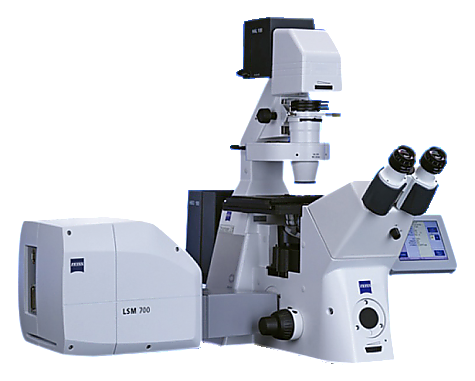 Confocal Microscopy_LSM700