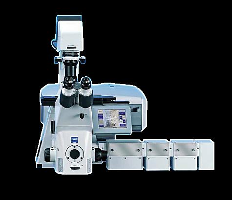 Multi-Photon Confocal Microscopy_LSM780NLO